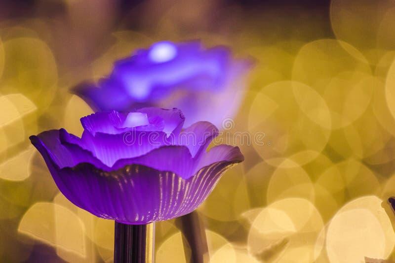 Цветки для создания красивого света стоковое изображение