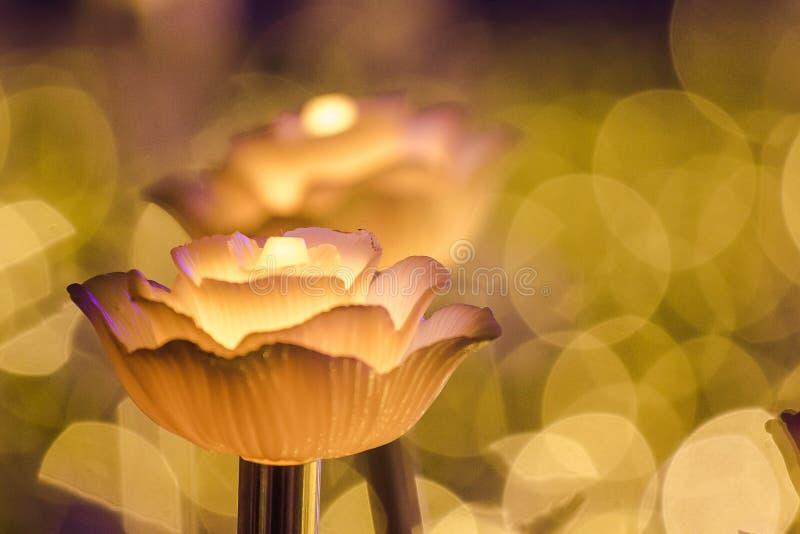 Цветки для создания красивого света стоковая фотография