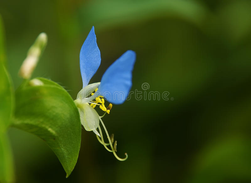 Цветки летания стоковое изображение