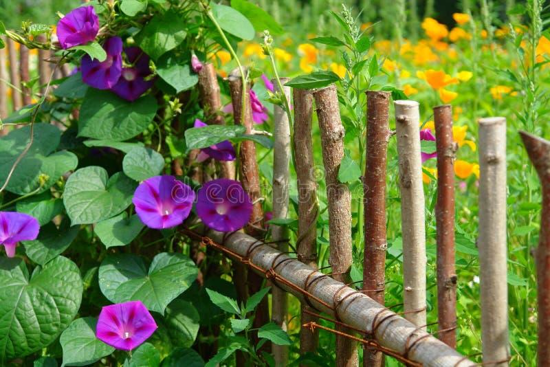 Цветки лета в загородке сада стоковое фото rf