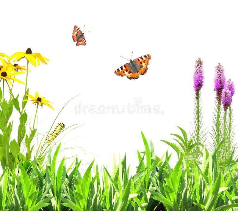 Цветки лета, листья зеленого цвета и насекомое стоковое фото rf