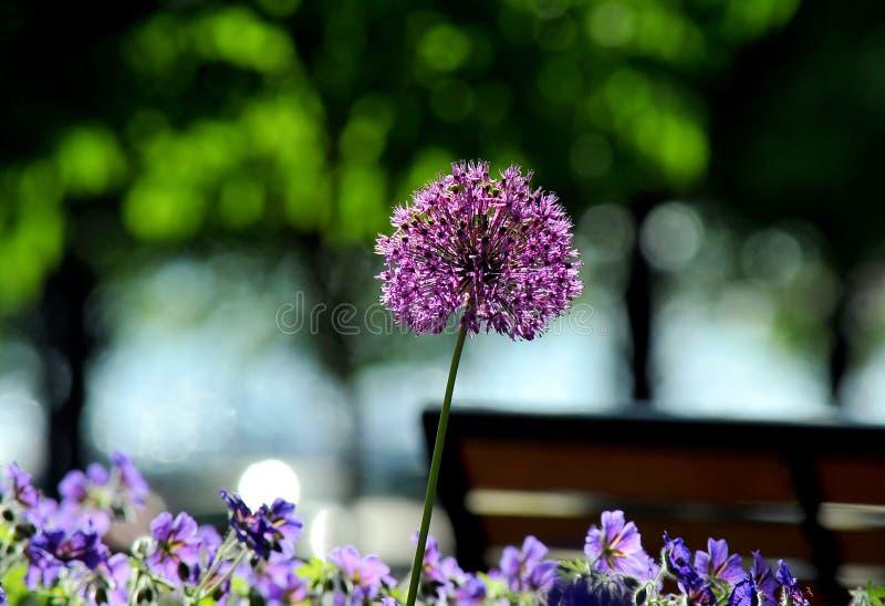 Цветки лета, Хельсинки, Финляндия стоковое изображение rf