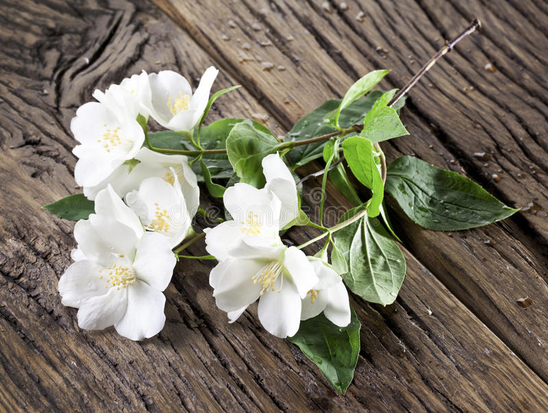 Цветки жасмина над старым деревянным столом стоковое фото