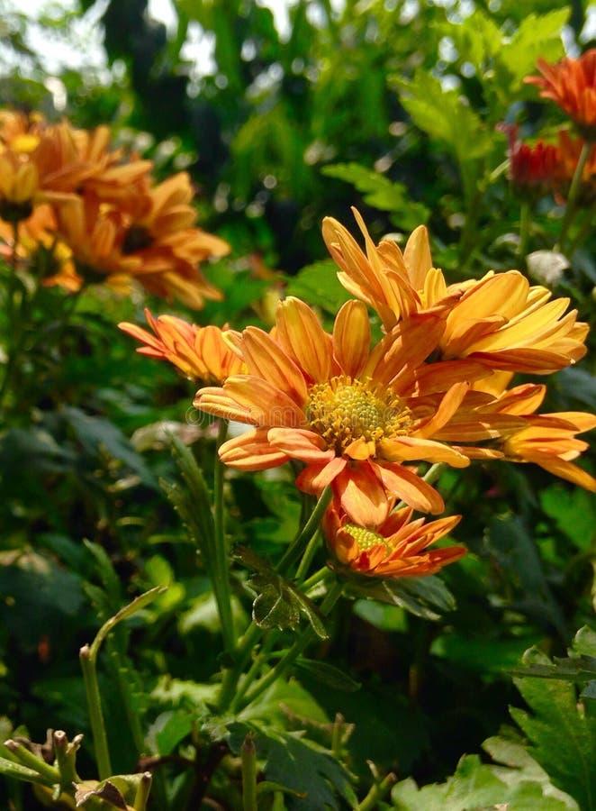 Цветки желтого цвета & orenge стоковые фотографии rf