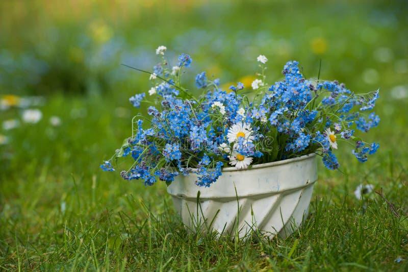 цветки забывают меня не стоковое изображение rf