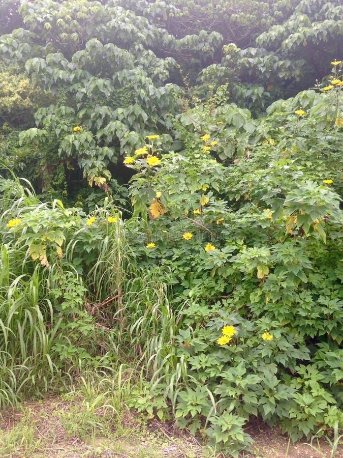 Цветки заводи Окинавы стоковое фото rf