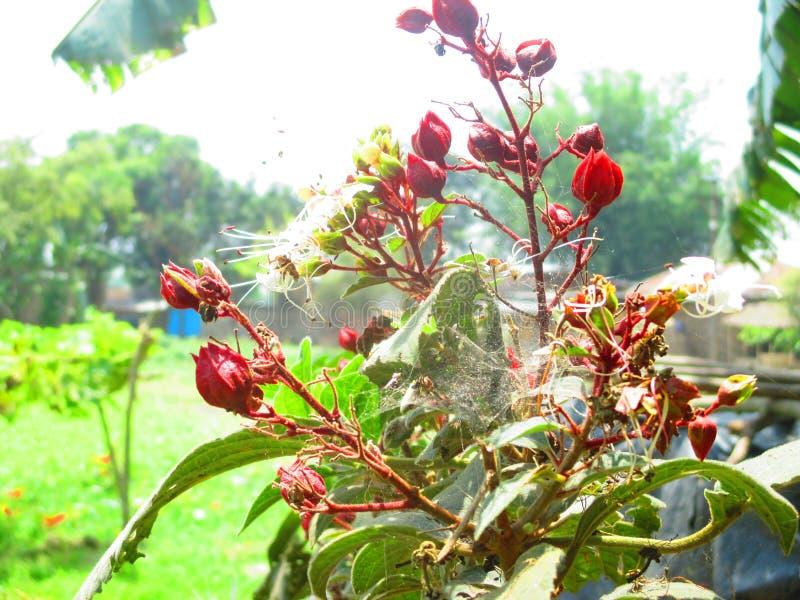 цветки засаживают красный цвет стоковые изображения rf