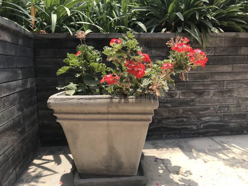 цветки изолировали белизну бака стоковое изображение rf