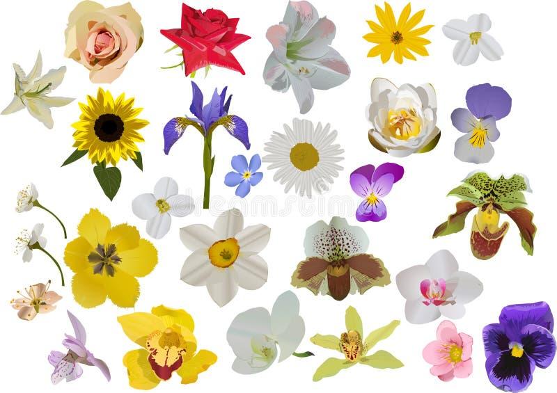 цветки изолировали большой комплект бесплатная иллюстрация
