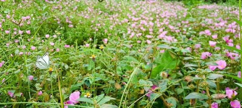 Цветки и бабочка стоковое фото