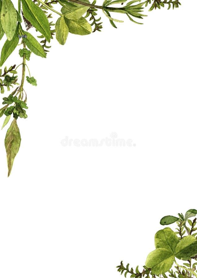 Цветки и заводы чертежа акварели стоковое фото rf