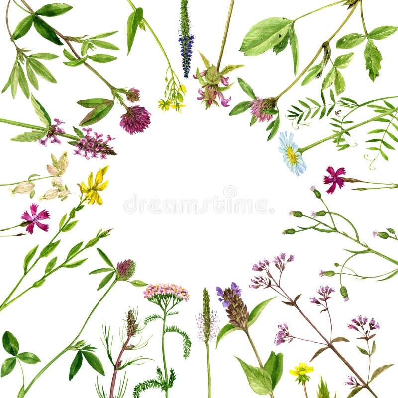 Цветки и заводы чертежа акварели иллюстрация вектора