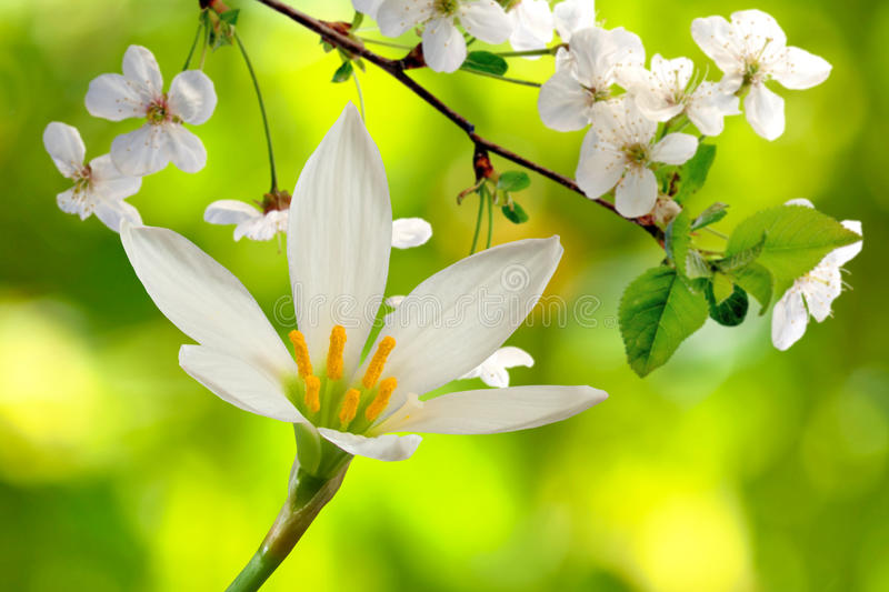 Цветки и зацветая ветви стоковые фотографии rf
