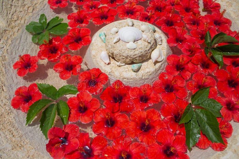 Цветки и зеленые листья плавая в чистую воду в каменной вазе стоковые фотографии rf