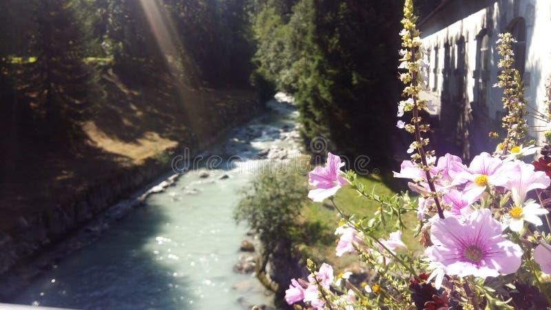цветки и зеленые растения около потока горы Весна стоковое изображение rf