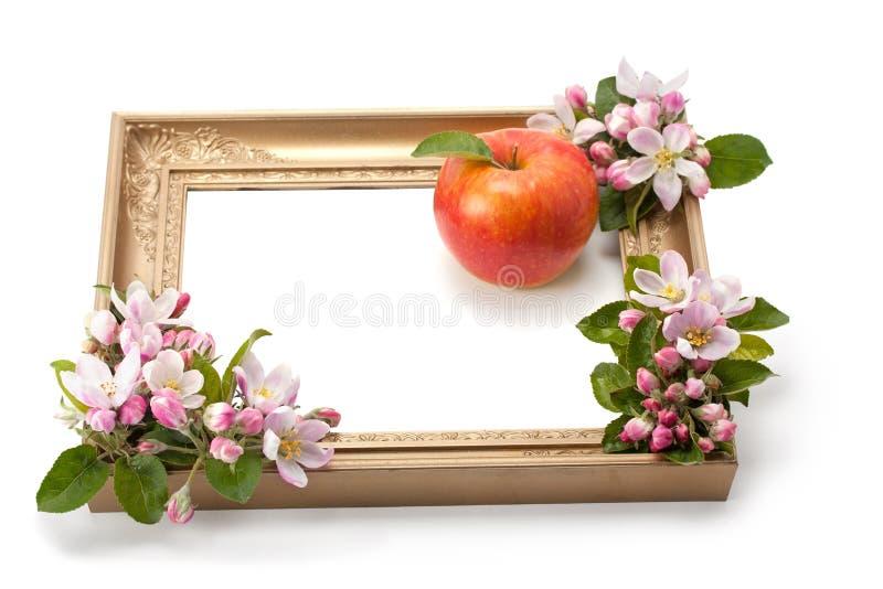 Цветки и зрелое яблоко в рамке стоковая фотография rf
