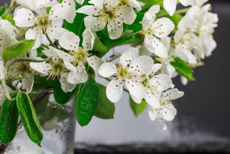 Цветки и листья Яблока с падениями воды стоковая фотография rf