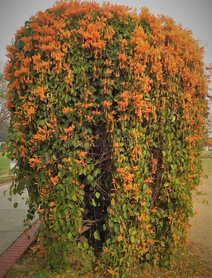 Цветки и листья в красивой форме стоковая фотография