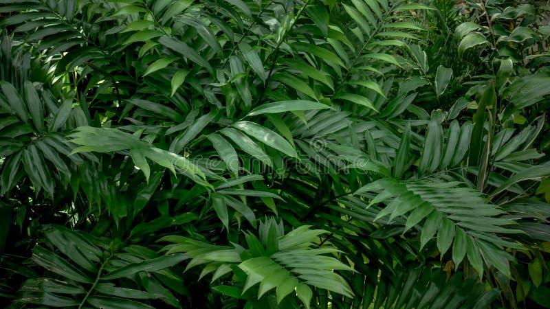 Цветки и листья текстуры предпосылки тропические стоковые изображения rf