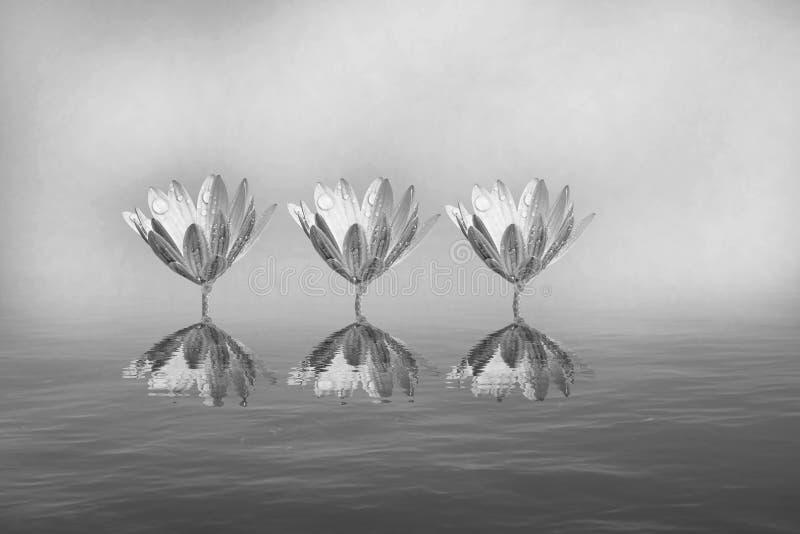 Цветки и морские звёзды в черно-белом стоковые изображения