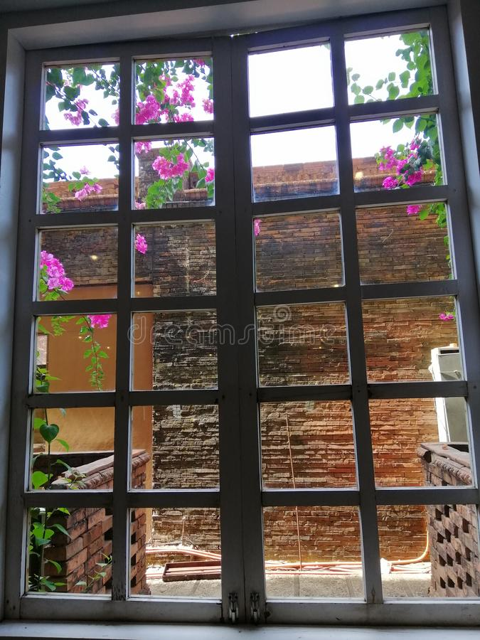 Цветки и окна стоковая фотография rf