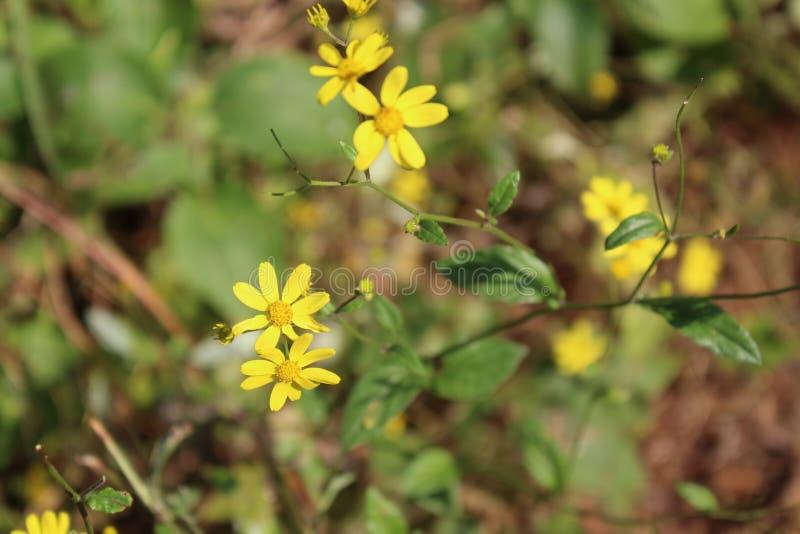 Цветки и природа стоковое изображение rf