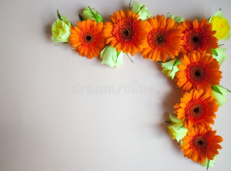 Цветки и розы Gerbera стоковые фото