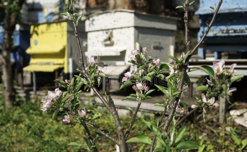 Цветки и рой пчел стоковое фото rf