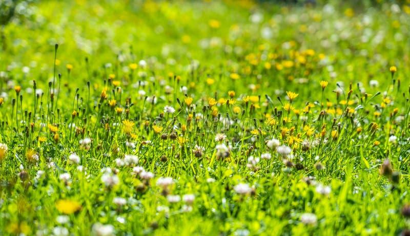 Цветки и травы луга загоренные ярким солнцем на красочном луге стоковые изображения rf