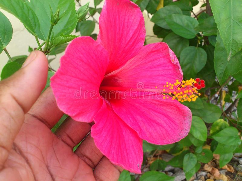Цветки и украшение стоковое изображение rf