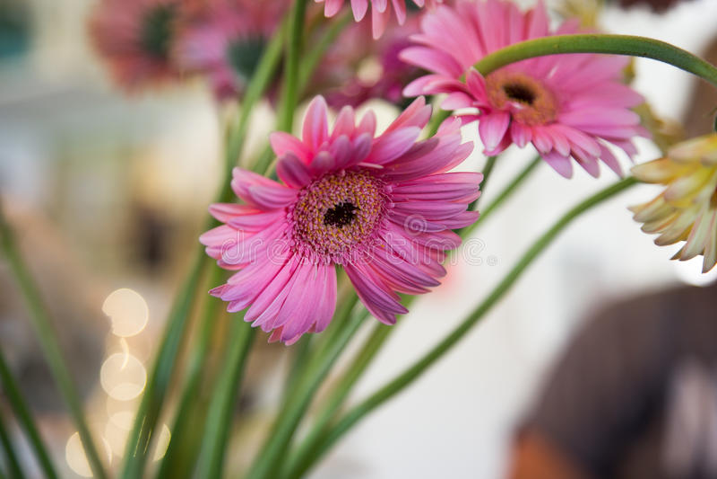 Цветки и цвета стоковое изображение rf