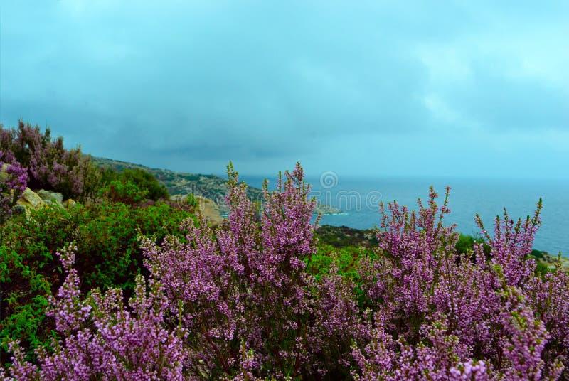 Цветки и Эгейское море стоковые фотографии rf
