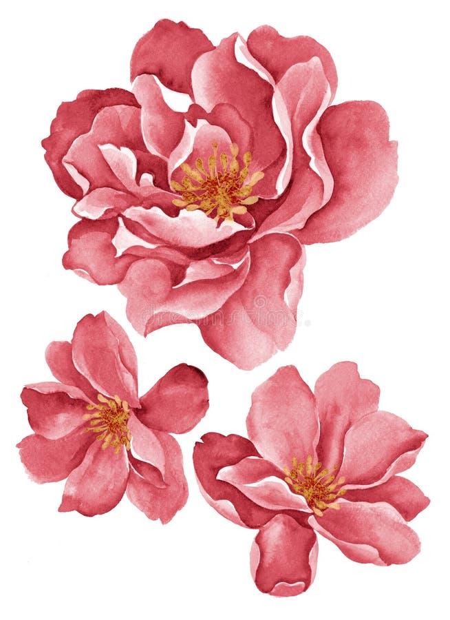 Цветки иллюстрации акварели иллюстрация штока