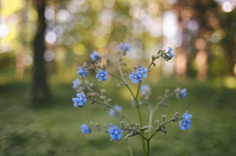 Цветки и bokeh стоковые фото