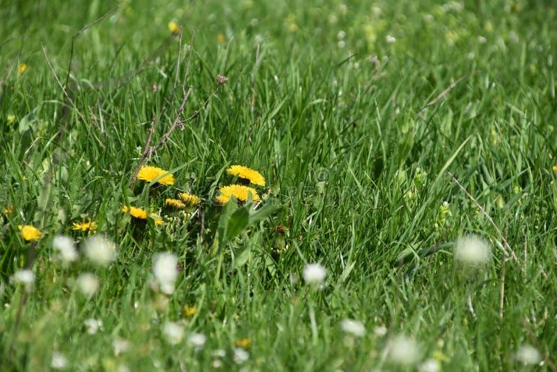 Цветки кажутся деревом стоковое изображение rf