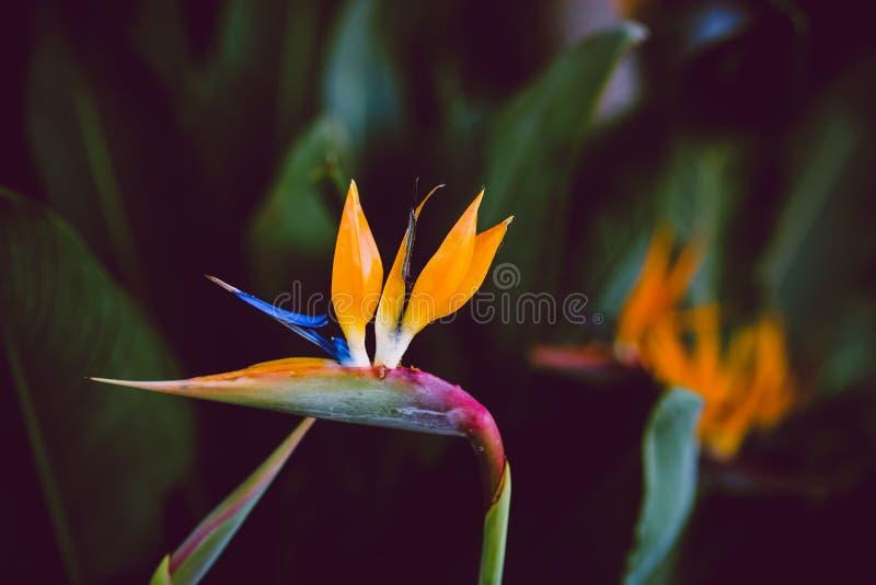 Цветки Калифорнии, садовничать зимы стоковые фотографии rf