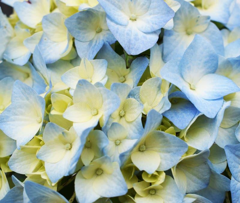 Цветки картины экзотические голубые стоковые фотографии rf