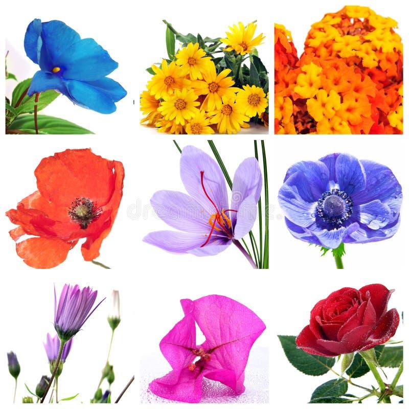цветки коллажа стоковое изображение rf