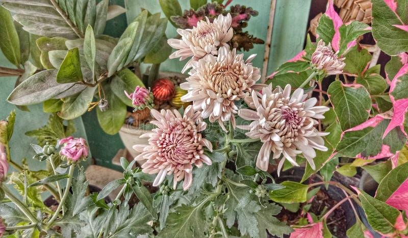 Цветки которое зацветает стоковая фотография rf