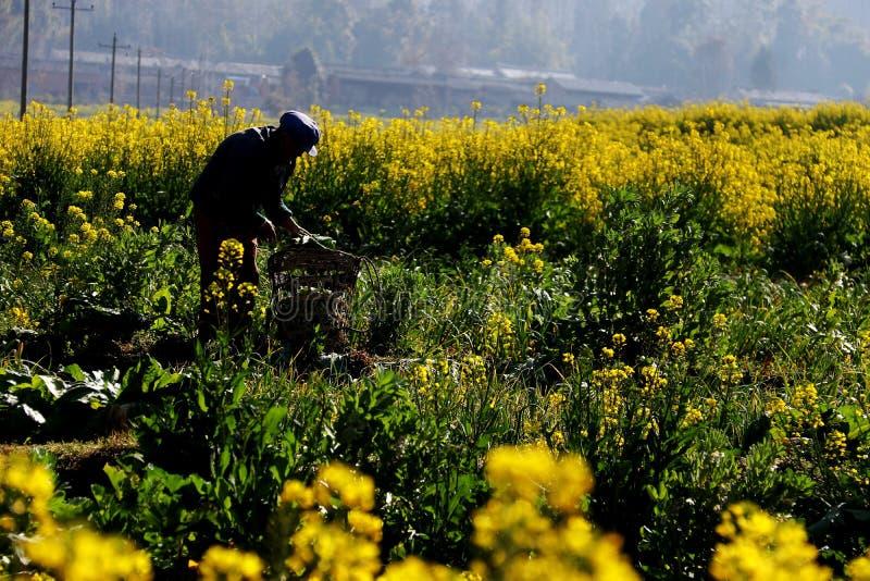 Цветки Коул стоковое изображение rf