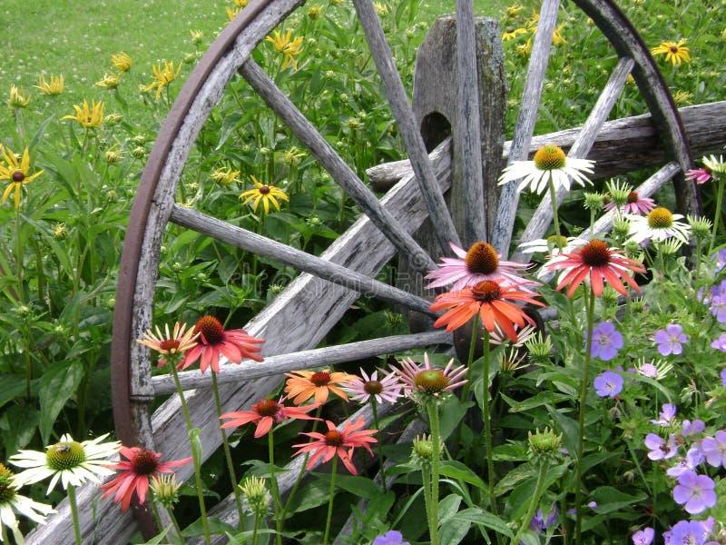 Цветки колеса телеги стоковое фото