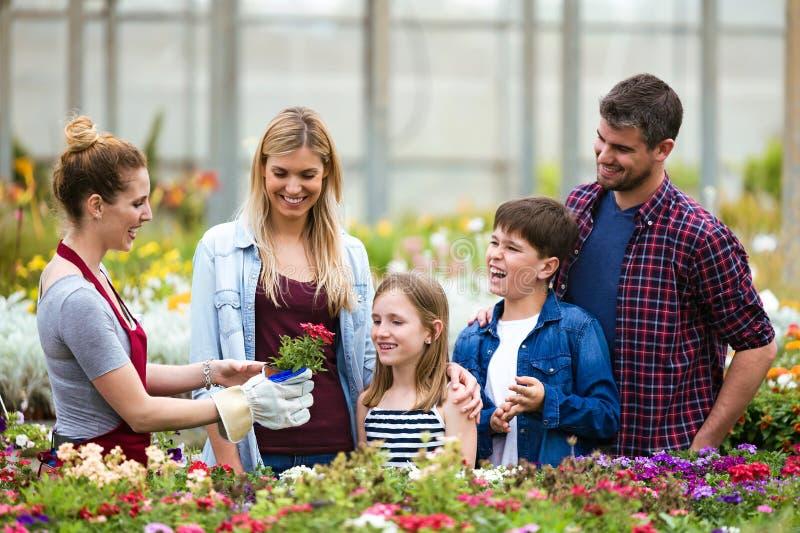 Цветки красивой семьи выбирая и покупая в парнике стоковые изображения rf