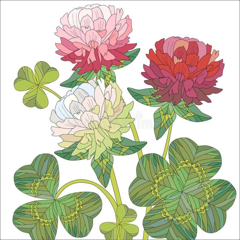 Цветки красного и белого клевера с листьями бесплатная иллюстрация