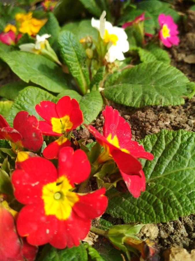 Цветки красного цвета и yelon стоковое изображение rf