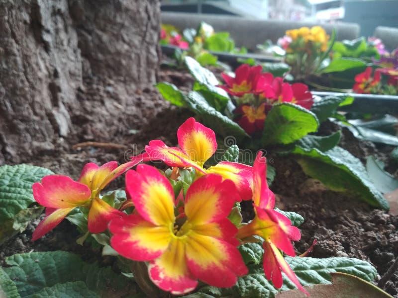 Цветки красного цвета и yelon стоковые изображения rf