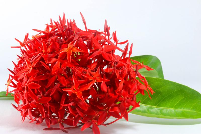 Цветки красят красный цвет стоковое фото