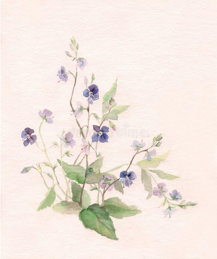 цветки крася акварель veronica бесплатная иллюстрация