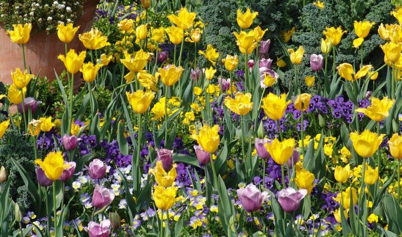 цветки кровати стоковые изображения rf