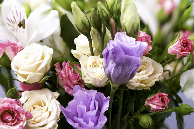 Цветки крупного плана красивые в пастельных цветах Поздравительная открытка, день ` s мамы, приглашение свадьбы, день рождения ск стоковая фотография