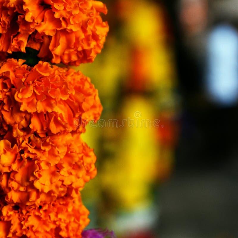 Цветки к жизни стоковая фотография rf